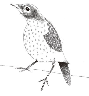 09-bird
