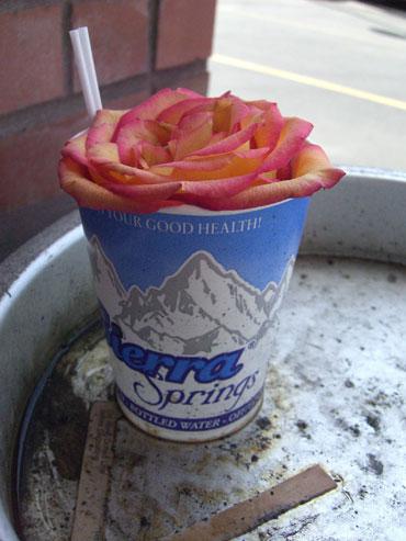 26-rosecity