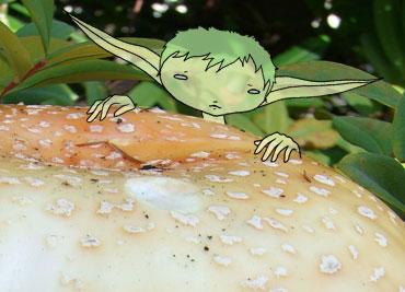 16-elfshroomie2