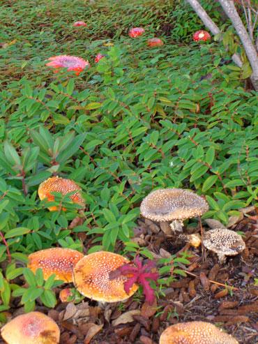 10-mushroom3