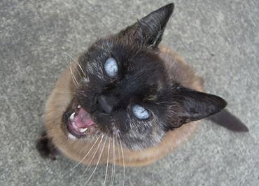 13-crazycat
