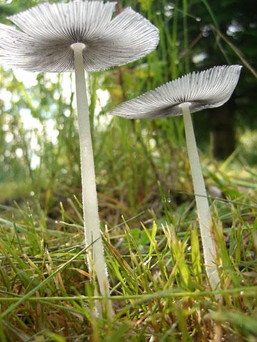 19-mushroom