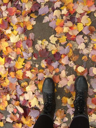 12-autumn1