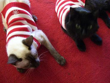 22-catsinsweaters