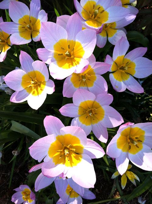 22-flowers3