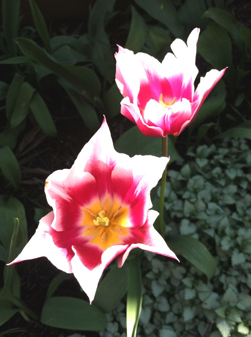22-flowers5