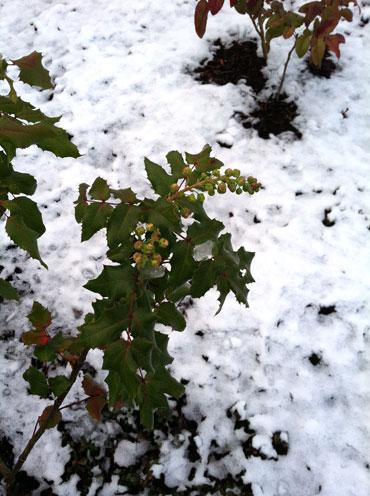 22-snow1
