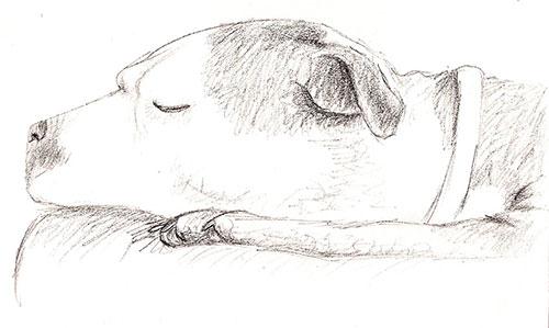 3-dogsketch1
