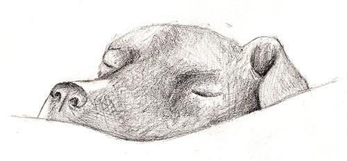 3-dogsketch2