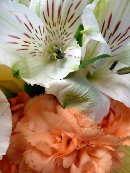 10-flowers3