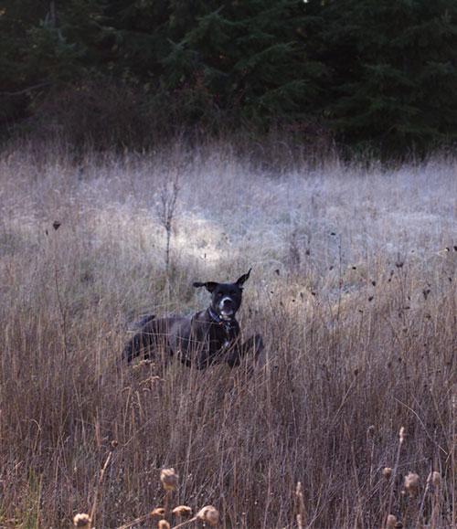 20-blythedog