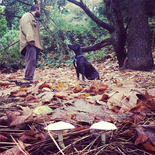 03-dog-mushroom-tony