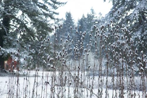 07-snowday6